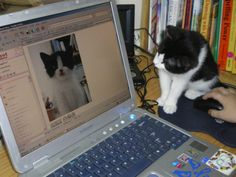 6 Simple Ways You Can Help Animals Online