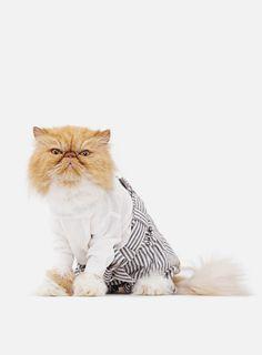 Everyone Should Buy United Bamboo's New Cat Calendar