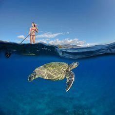 Incredible Underwater Photography!