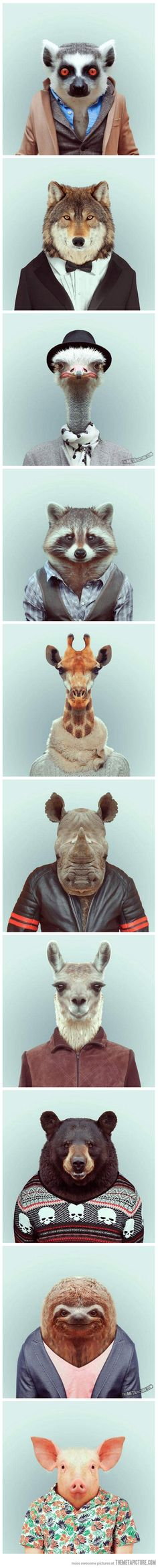 Funny portraits of animals dressed like humans…