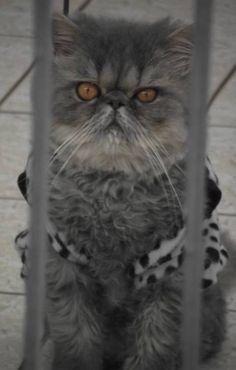 Kolber behind bars!