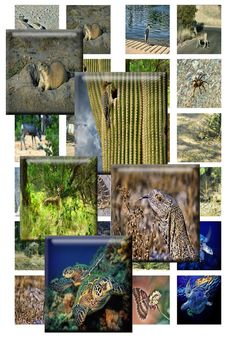 SOUTHWEST WILDLIFE  Scrabble Tiles for Jewelry by DesertLifePrints, $2.50