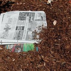 Frugal gardening reducing weeds.