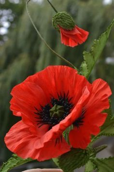 Flowers Red Flowers red poppies 17 ideas for 2019 Exotic Flowers, Red Flowers, Beautiful Flowers, Craft Flowers, Summer Flowers, Poppies Tattoo, Tattoo Flowers, Container Gardening Vegetables, Succulent Containers