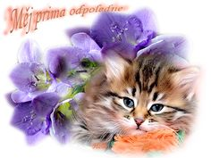 Cats, Animals, Image, Gatos, Animales, Animaux, Kitty, Cat, Cats And Kittens