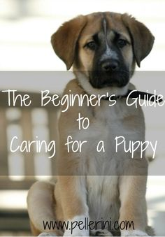 The Beginner's Guide to Caring for a Puppy - we didn't know what we were getting ourselves in to when we picked Sadie up.  I learned a lot by doing and I hope these tips will help you too!