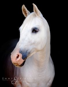Beautiful white grey horse with pink nose. Fairytale by Eriqsson on DeviantArt
