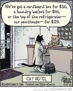 Funny pictures about Cat Hotel. Oh, and cool pics about Cat Hotel. Also, Cat Hotel photos. Hotel Gato, Cat Hotel, Crazy Cat Lady, Crazy Cats, Bizarro Comic, Cat Comics, Photo Chat, Humor Grafico, Here Kitty Kitty
