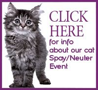 spay/neuter specials at All About Animals
