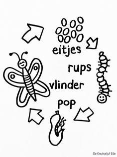 Van eitje tot vlinder - kleurplaten | Kleurplaat kleurplaten vlinders-rupsen | cyclus van eitje-tot-vlindertjes | vlindertjes rupsje tekenen-kleuren (6)