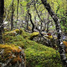 #trollskog #kinsarvik