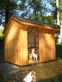 | GOAT SHEDS has most of what I'm looking for except windows and ledges on the inside for goats to lay on.