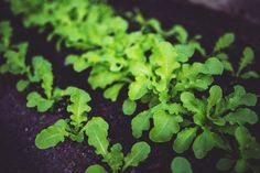 La agricultura ecológica supone un modelo de producción de alimentos beneficioso y sostenible, pero ¿en qué consiste la agricultura ecológica? #AgriculturaEcologica #HuertoUrbano