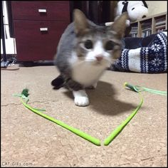 "Animated CAT GIF • Wiggle... Wiggle... Ohagi the pouncing Cat is flying. ""Wait for it!"""