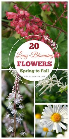 flower garden care The trick to long-lasting blooms in your perennial flower garden is plant choices, timing, and care. I will show you tips to have continuous blooms from early spring until the frosts of late fall. Fall Perennials, Flowers Perennials, Planting Flowers, Flower Gardening, Flowers Garden, Garden Plants, Long Blooming Perennials, Fall Flower Gardens, Spring Blooming Flowers