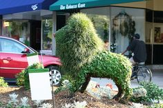 Lion Topiary by Park Seed, via Flickr
