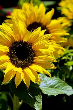 I love sunflowers and Daisies!!