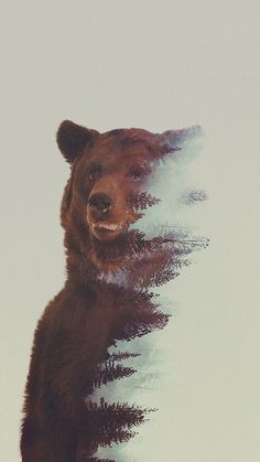 Norwegian artist Andreas Lie created this great series of double exposure artworks featuring animals and their natural habitat. More art on the grid via Fubiz Bear Tattoos, Animal Tattoos, Portraits En Double Exposition, Art D'ours, Natur Tattoos, Tatoo Art, Bear Art, Design Graphique, Double Exposure