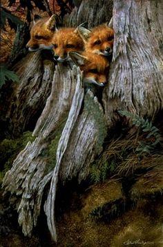 little foxes in tree trunk