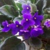 Štedrák ako závin (fotorecept) - recept | Varecha.sk Plants, Plant, Planets