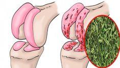 Peppermint regenerates the cartilage of the hip and knees .- La menta piperita rigenera la cartilagine di anca e ginocchia. Ecco la ricetta Regenerates cartilage of hip and knee - Cold Remedies, Health Remedies, Natural Remedies, Health And Beauty, Health And Wellness, Uric Acid, Knee Pain, Natural Medicine, Healthy Tips