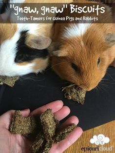 """""""Wheek, wheek!""""   I've created dog and cat treat recipes, but no guinea pig recipes - and  -seeing that we don't have a dog or a cat, but we do have two adorable  piggies!!(Peanut Butter (PB) and Cinnamon (Min-min) I was feeling a little  guilty.... So, I created a recipe using th"""