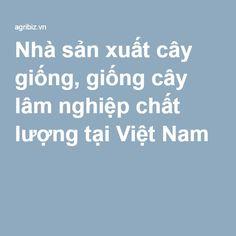 Nhà sản xuất cây giống, giống cây lâm nghiệp chất lượng tại Việt Nam