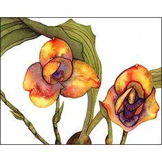 "Lycaste Watercolor on Arches 140 lb.  cold press cotton rag paper 8  5/8"" h x  10  1/2"" w    Unframed"
