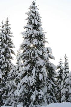 Canadian Christmas 'Star'