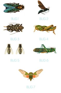 Set of 6 Vintage Bug Insect Boy's Playroom Bedroom by honeyandfitz, $79.00
