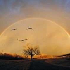 Happy rainbow with birds...amazing, it looks like the moon!