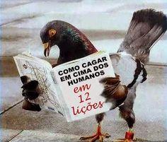 Karmantica: il dilemma del piccione..
