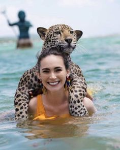 There is a place where you could Freely Swim With Creatures You thought had been deadly – Trending Buzz oh my God she has Edgar on her back! Cute Baby Animals, Animals And Pets, Funny Animals, Beautiful Cats, Animals Beautiful, Bath Girls, Big Cats, Beautiful Creatures, Animal Kingdom