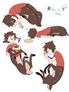 How a dipper sleeps