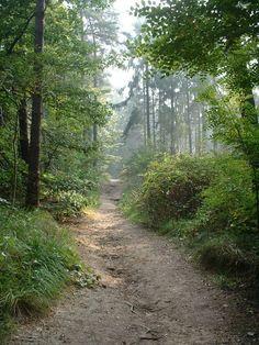 Opa's wandelroute: Nijmegen-Berg en Dal: Heksenkuil ~ Duivelsberg