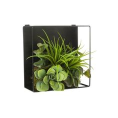 """Threshold Faux Succulent and Air Plant Shadow Box 3.5x8x8"""" ($22) ❤ liked on Polyvore featuring home, home decor, floral decor, plants, decoration, fillers, flowers, green, artificial flowers and decorative accents"""