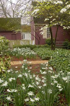 A white and green spring garden,Colonial Williamsburg,VA. Colonial Williamsburg Va, Williamsburg Virginia, Colonial Garden, Foundation Planting, Colonial America, Flowering Trees, Spring Garden, Garden Inspiration, Exterior