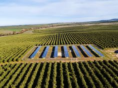 IFC & ABE Partner to Fund Solar Irrigation System for Egyptian Farmers