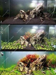 1000pcs/bag Aquarium Plant Seeds,Moss Bonsai Seeds,Water Aquatic Plant Seed,New Variety Light up Your Fish Tank