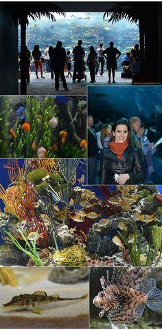 Atlanta | Georgia Aquarium