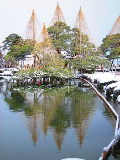 Snow-covered Yukitsuri at the Kenroku Garden, Kanazawa, Japan
