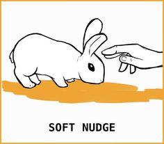 Rabbit Body Language: An Illustrated Guide Rabbit Run, Silly Rabbit, Pet Rabbit, Pet Bunny Rabbits, Bunnies, Rabbit Facts, Rabbit Behavior, Female Rabbit, Guinea Pig Care