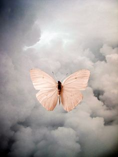 butterfly in the clouds Oldschool, Butterfly Kisses, Pink Butterfly, Butterfly Quotes, Butterfly Wings, Tier Fotos, Animal Totems, Deviant Art, Spirit Guides