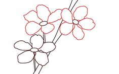 How To Draw Cherry Blossoms Step 5