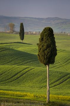 Cypress trees and countryside near Pienza, Tuscany, Italy. © Brian Jannsen Photography