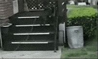 Dog GIFs Hedge Fail