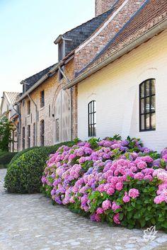 Garden Deco, Garden Pool, Back Gardens, Outdoor Gardens, Dream Garden, Home And Garden, Outdoor Spaces, Outdoor Living, Belgian Style