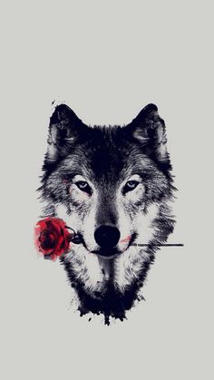 Wolf holding a rose, caught my eye  #Wolf #Rose #Nature