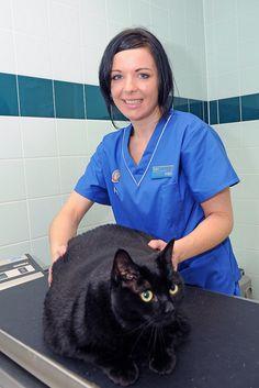 PDSA Pet Fit Club finalist Mini Moo, is a staggering 94% overweight by PDSA, via Flickr