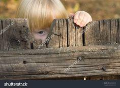 Cute Little Blond Girl Peering Through A Gap In A Broken Board In A Rustic Wooden Fence With One Eye Stock Foto 228409636 : Shutterstock